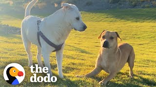 Stray Dog Wags His Tail For The First Time - When He Meets A Girl Dog | The Dodo Faith = Restored