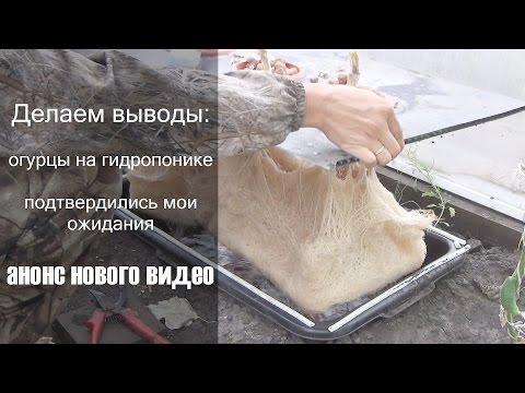 видео: Итоги выращивания огурцов на гидропонике в теплице, анонс новых экспериментов