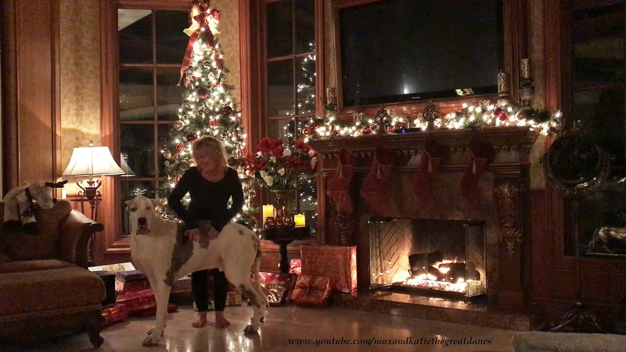 Alexa Christmas Music Cuddling with Deaf Great Dane - YouTube