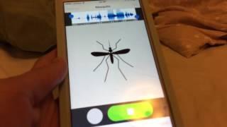 Voice Plus App!!