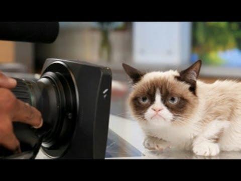 Grumpy Cat Movie In Works After Film Deal; Oprah Winfrey Harvard Commencement Speech
