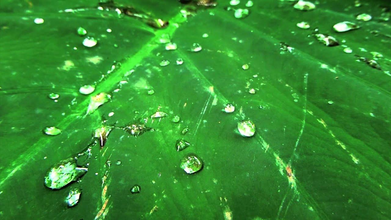 5614, Gotas de agua en una hoja verde [Efecto], Plantas, árboles ...