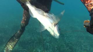 Sıg Su Zıpkın Avları - Cupra,Sargoz,Mırmır-Shallow Water Spearfishing e1