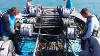Ставим сети на водоросли суши хуюши