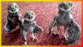Смешное видео про животных Для детей и не только Создай себе хорошее настроение(Смешное видео о животных.Подборка интересных и забавных кадров.Прикольные животные Поднимите себе настро..., 2017-02-02T19:06:47.000Z)