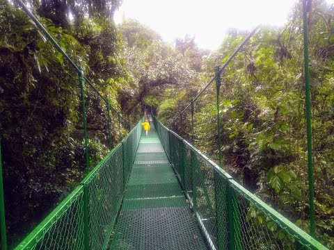 Suspended Bridges  Monteverde