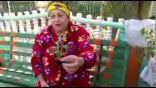 ЦЕ МОЄ ЖИТТЯ  (Это   моя  жизнь)(Выращивание и уход за шаровидными хризантемами (мультифлора) от Сердюк Валентины Павловны., 2014-02-12T19:35:20.000Z)