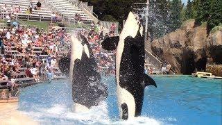 Orca Encounter (Full AM Show) at SeaWorld San Diego on 9/14/18