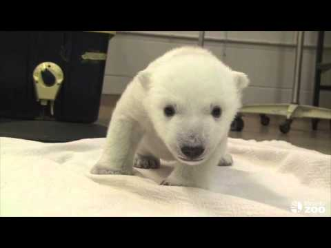 Cubs First Steps