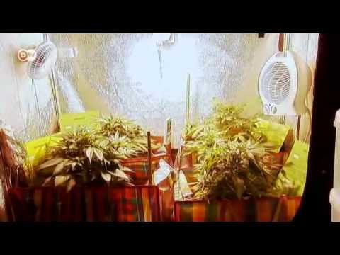 Belgium: Quasi-legal cannabis plantations
