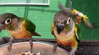 Vogelpark Ambigua in Zeihen (CH) YouTube Videos