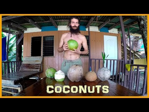 LEARN ABOUT THE STAGES OF THE COCONUT: FROM YOUNG TO MATURE