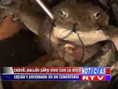 CHOTA HALLAN SAPO COCIDO LA BOCA