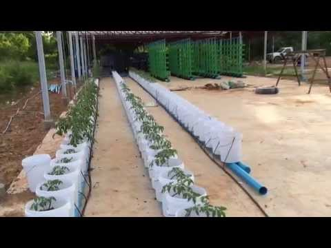 Commercial Aquaponics System Build Part 14