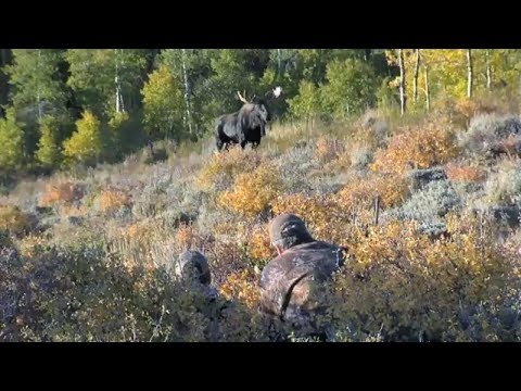 Wildlife and The Public Trust Doctrine