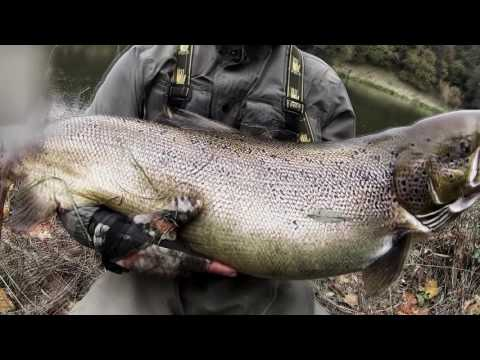 Salmon fishing Lithuania. Neris.