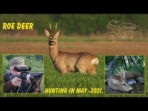 Roe Deer Hunting in May – Croatia, Drnje 2021