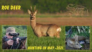 Roe Deer Hunting in May - Croatia, Drnje 2021