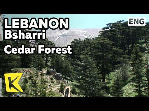 【K】Lebanon Travel-Bsharri[레바논 여행-브샤레]수천 년 묵은 백향목 군락지/Cedar Forest/Alpine Region/Tree