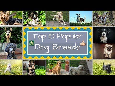 Top 10 Popular Dog Breeds