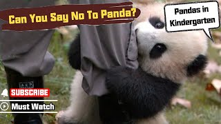 【Panda Top3】Nanny could resist panda's cuteness thumbnail
