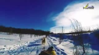 Оленья ферма в подмосковном Дзержинском