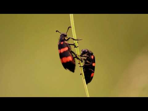 Canon 700d sample video || Nature HD