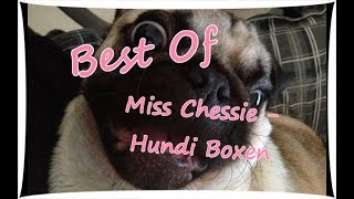 Best Of Miss Chessie & Zombey | Hundi Boxen | Pfötchen box & Dogz Box