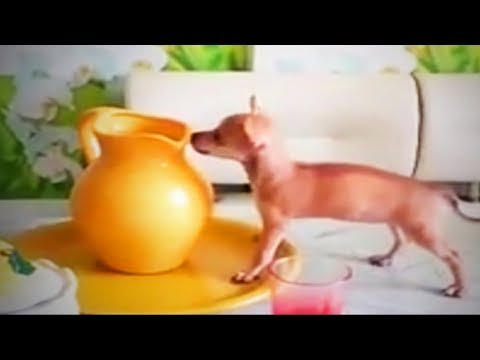 Hilarious Dogs  🐶 😍 Cute Dogs Being Funny (Part 2) [Funny Pets]