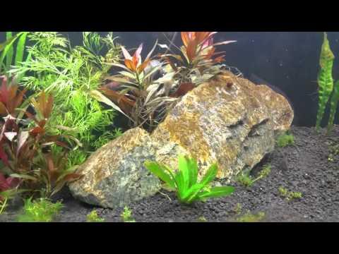 Brown Algae Problem & EI Dosing (Day 1)