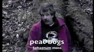 09 Mosses, Sphagnum Moss [ Bryophyta ] ~ Dr. Ted Wohnsiedler