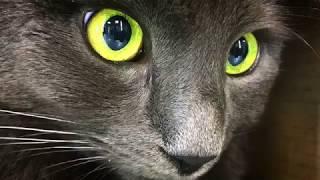 Мистические глаза кота Бени в гостинице для кошек Мир Мяу (Киев)