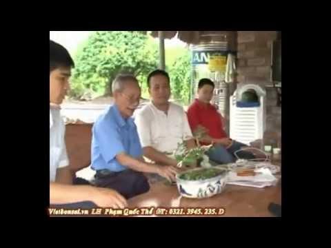 Tạo hình nghệ thuật cho cây cảnh- P4/6* alomua.vn, huongsacdatviet.com, tacphamvietnam.com