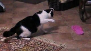 Кошки против Вьетнамок. сборник 2