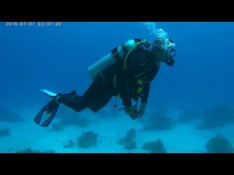Red Sea Scuba 2017
