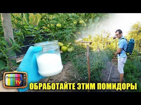 Фитофтора на помидорах как бороться народными средствами видео
