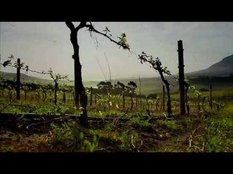 Best Wine farms in Cape Town