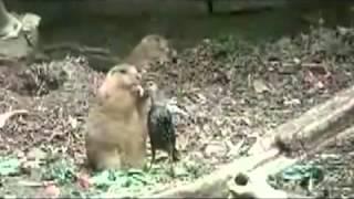 Бурундук дружит со скворцом Приколы про животных Юмор