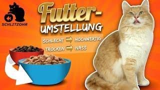 🔥Futterumstellung Katze - Katze frisst nur Trockenfutter | Katze an Nassfutter gewöhnen | Tipps