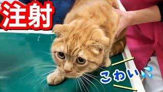 2回目のワクチンと血便で病院に行ってきた猫の様子