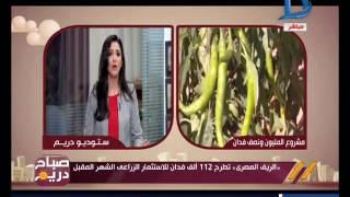 صباح دريم   112 ألف فدان للإستثمار الزراعي تطرحها شركة الريف المصري الشهر المقبل..