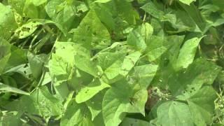 Introductorio Sanidad Vegetal