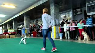 Ижевск Выставка собак 26 10 2013 Фристайл