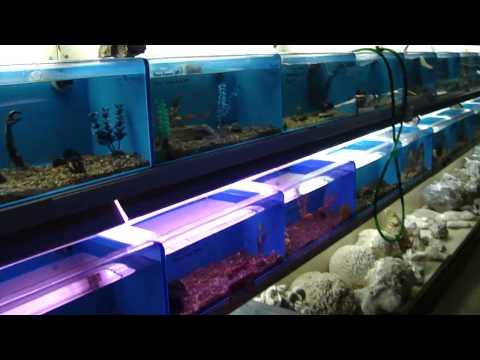 Walk through of aquarium store, Mike's Aquarium, Spring Valley