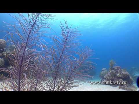 куба подводная охота