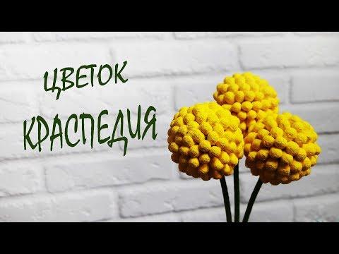 Очаровательные желтые цветы / Краспедия из ватных палочек
