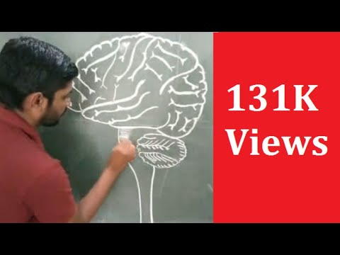 how to draw structure of brain easily step by step - YouTube