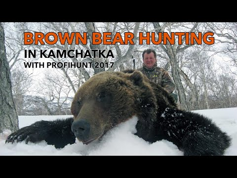 Brown Bear hunting in Kamchatka with ProfiHunt 2017