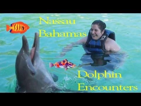 Dolphin Encounters - Blue Lagoon Island -  Nassau, Bahamas