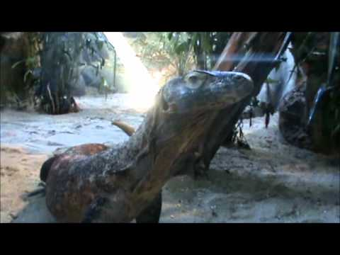 Turtle Back Zoo Trip June 2012 Part 1